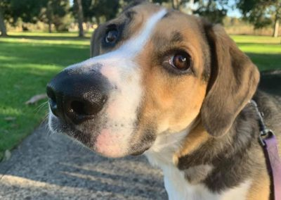 Best Vet for Pets and Farms Gippsland Vet Group Foster