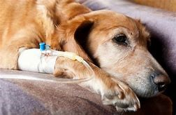 Managing a snake bite in a dog or cat how your vet can help