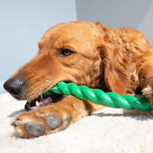 Kong Safestix Chew Toy Gippsland Veterinary Group
